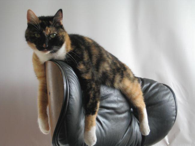 poltrona eames gato